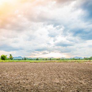 מדריך לרכישת קרקע חקלאית